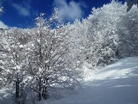 arbres_neige